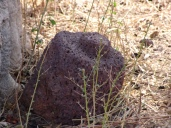 Stein am Baobab2