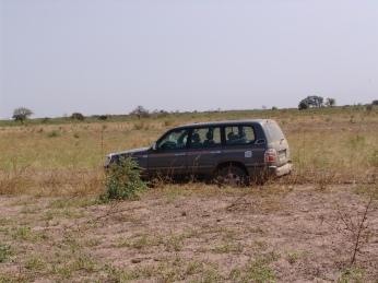 Toyota im Busch