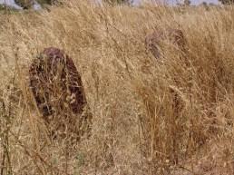 versteckt im Gras2